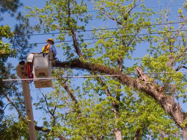 expert tree cutter